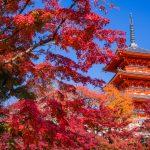【格安】京都に連泊する3つの確実な方法:観光や長期出張で1週間程住む人向け