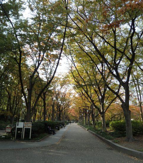 """北は""""梅田""""、南は""""難波""""、東は""""大阪城""""、西は""""大阪ベイエリア(南港)""""など各方面へアクセスするなら「本町」が便利です!"""
